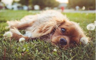 Como Tener a un Perro en Un Departamento