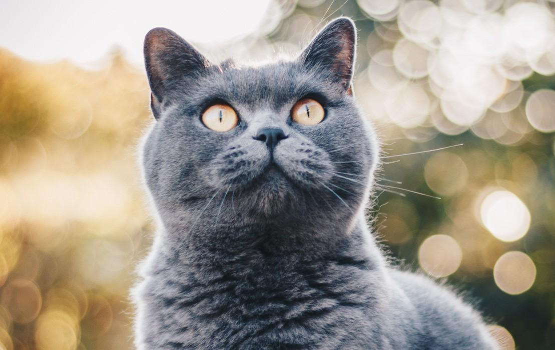 Consejos Para Cuidar Tu Gatito